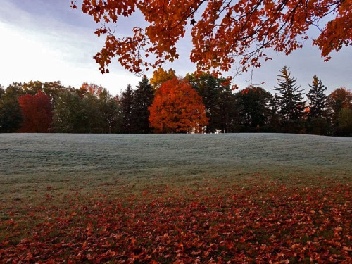 Frosty morning at Beckley Park in Ann Arbor