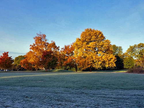 Hard freezes and frosts are beautiful to capture at dawn amongst the colors