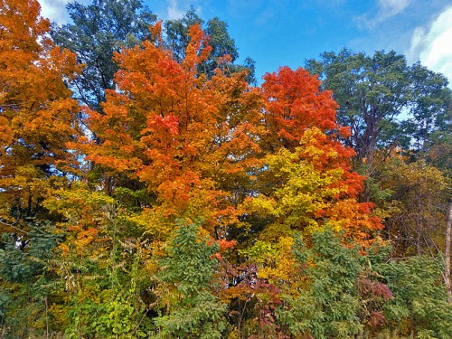 The colors of summer and Fall work beautifully together