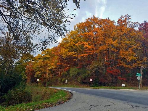 Huron River Drive, Ann Arbor Fall colors