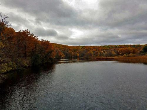 Barton Nature Area in Ann Arbor