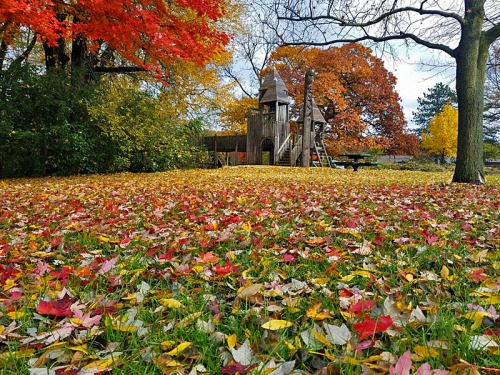 Ann Arbor Fall colors, Fuller Park