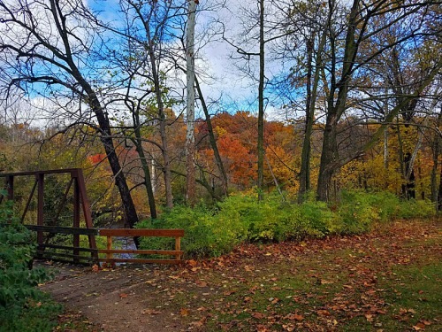 Island Park Fall goodness in Ann Arbor
