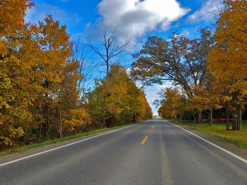 Brighton and Livingston County, Michigan fall colors