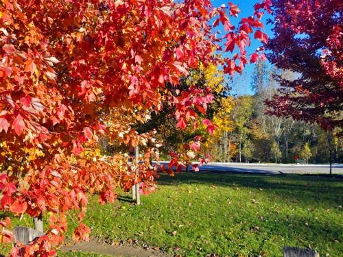 Ann Arbor Autumn - Parker Mill County Park, Michigan Autumn